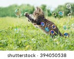 Stock photo kitten playing with soap bubbles on green field in summer side view 394050538