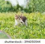 Stock photo curiosity kitten playing with soap bubbles on green field in summer front view 394050544