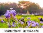Landscape Garden With Selectiv...