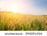sunset and grass | Shutterstock . vector #394091434