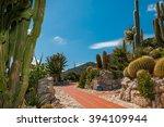 Cactus Garden Of Cote D'azur