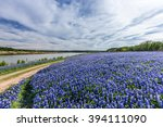 texas bluebonnet filed  in... | Shutterstock . vector #394111090