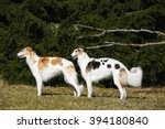 two giant borzoi sight hounds... | Shutterstock . vector #394180840