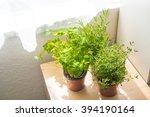 kitchen herbs | Shutterstock . vector #394190164