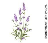 set of lavender flowers elements | Shutterstock .eps vector #394198096