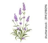 set of lavender flowers elements   Shutterstock .eps vector #394198096