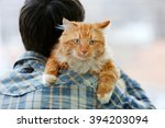 Fluffy Red Cat Sitting On A Ma...