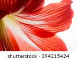 red flower close up background... | Shutterstock . vector #394215424