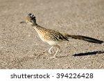 Greater Roadrunner Bird Runnin...