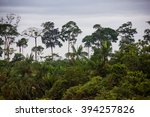 Amazon Rain Forest  Brazil