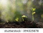 young plant growing in the... | Shutterstock . vector #394325878