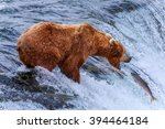 grizzly bears fishing salmon at ... | Shutterstock . vector #394464184