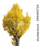 Isolate Tree Yellow White...