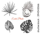 vector exotic hand drawn palm...   Shutterstock .eps vector #394543066