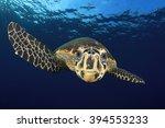 hawksbill sea turtle | Shutterstock . vector #394553233