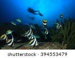 scuba diving  divers explore... | Shutterstock . vector #394553479