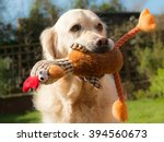 Stock photo a happy dog holding a soft toy 394560673