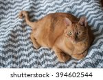 Stock photo fat orange tabby cat laying down in natural light 394602544