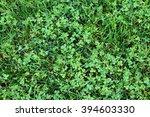 Green Bright Grass  Clover ...