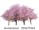 pink flower sour cherry tree... | Shutterstock . vector #394675564
