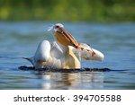 pelican | Shutterstock . vector #394705588