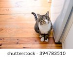 Portrait Of Domestic Tabby Cat...