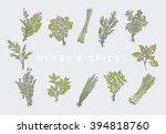herbs set | Shutterstock .eps vector #394818760