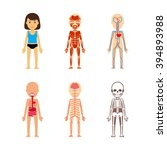 female body anatomy | Shutterstock . vector #394893988