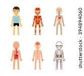 body anatomy | Shutterstock . vector #394894060