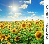 Sunflowers On A Background Of...