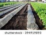 vegetable garden  | Shutterstock . vector #394919893