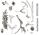 Vector Set Of Twigs  Pine Cone...