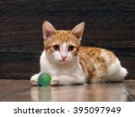 Stock photo little kitten playing with a toy on the floor toy green ball background dervyannaya board 395097949