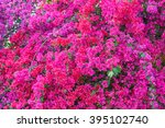 Bougainvillea Paper Flower In...