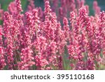 blooming purple heuchera in the ... | Shutterstock . vector #395110168