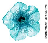 Small photo of Turquoise althea flower macro isolated on white