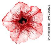 Small photo of Red althea flower macro isolated on white
