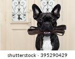 French Bulldog Dog  Waiting A...