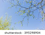 Abstract Spring Background....