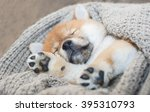 Stock photo shiba inu puppy 395310793
