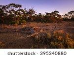 Dry Dead Tree In Australian...
