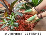 Mulching Garden Beds With Red...