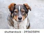 Portrait Of A Sad Homeless Dog