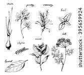 vector green spices collection... | Shutterstock .eps vector #395659924