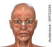 female face muscles anatomy  | Shutterstock . vector #395721034