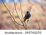 black bird on tree   amazing ...   Shutterstock . vector #395742070