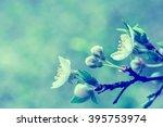blooming cherry  flowers....   Shutterstock . vector #395753974