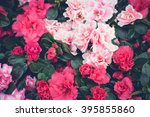 Floral Background  Red And Pin...