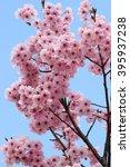 cherry blossoms | Shutterstock . vector #395937238