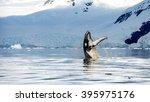 hampback whale breaching... | Shutterstock . vector #395975176
